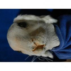 Hase  Kaninchen  Maske mit Plüschohren