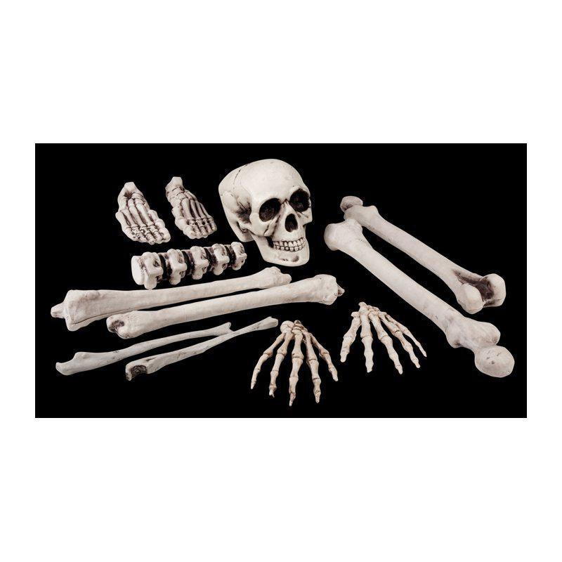 Menschliches Knochen und schädel kunststoff